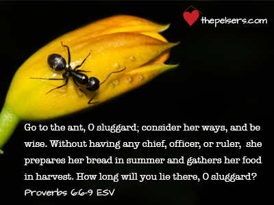 The Proverbs 31 Woman – Go to the Ant