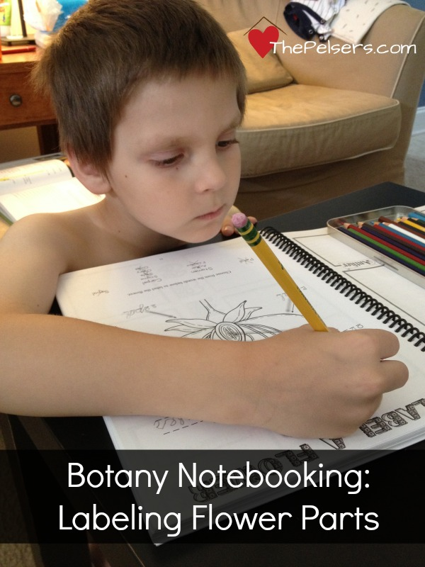 Botany Notebooking Flower