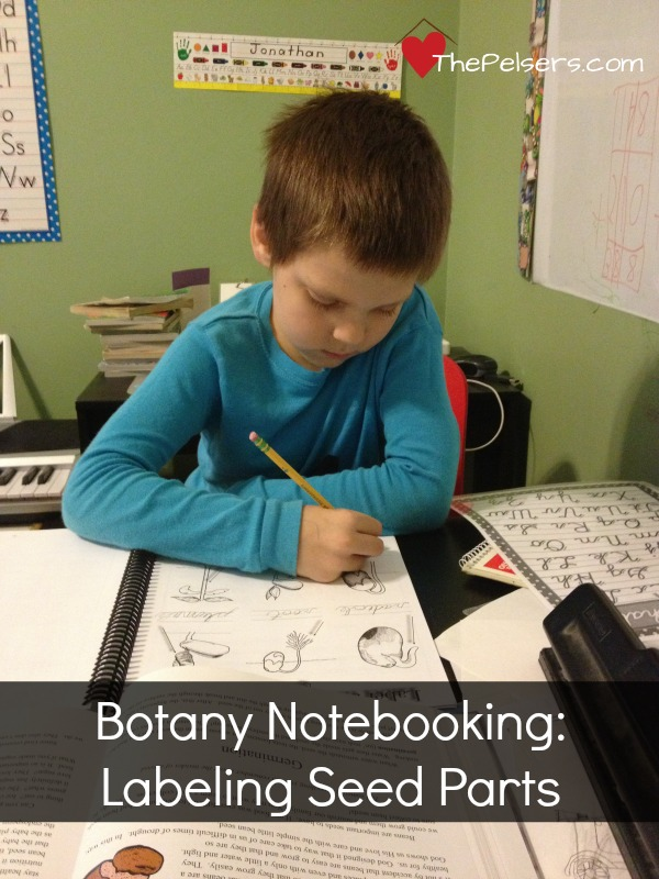 Botany Notebooking